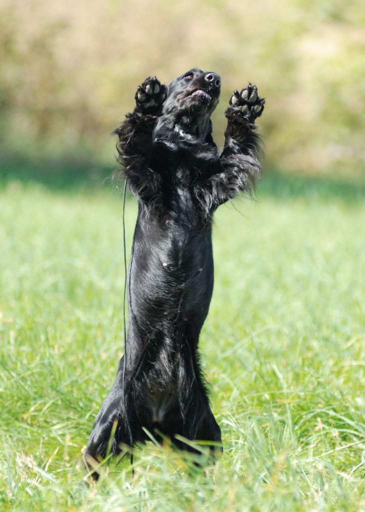 Buggie-Bear
